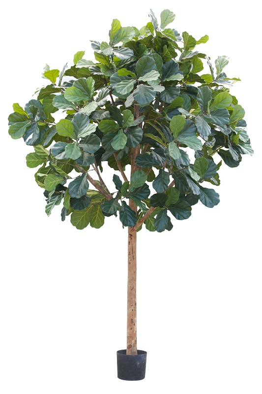 Fructus Tree