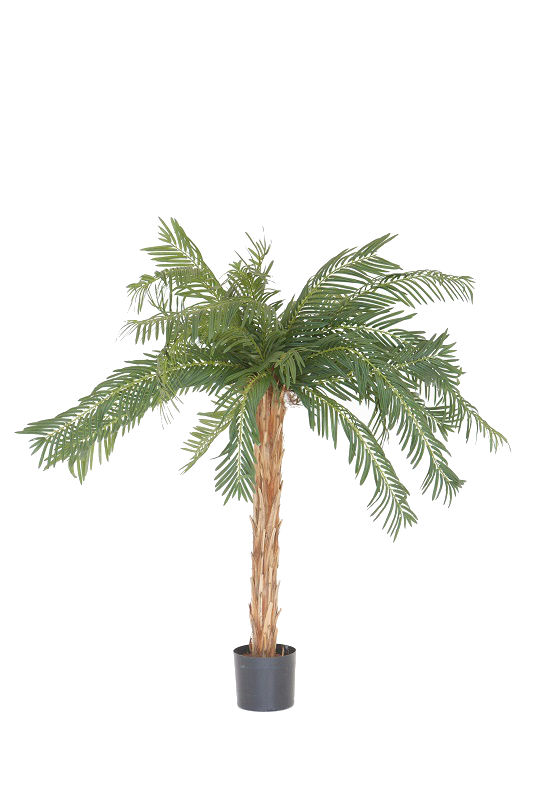 Table Top Palm Plant